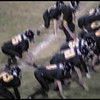 Video Archive Clip 2004 (Oct) - Yaden, Steven R. - Age 16 - Steve (#35, black jersey) plays varsity football for the Thompson Valley Eagles - Game 3 - Thompson Valley High School vs Greeley Central High School - Ray Patterson Field - Loveland, CO - Original VHS Series (4 min 25 sec)